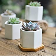 SUN-E 3.2 Inch Modern White Ceramic Succulent Planter Pots/Mini Flower Plant Containers with Bamboo Saucers (Hexagonal)