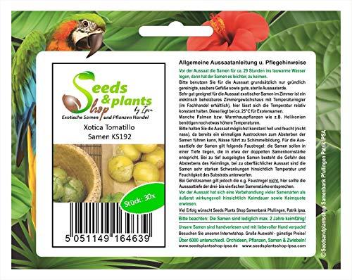 Stk - 30x Xotica Tomatillo - Physalis Samen Obst Frucht Garten Pflanze KS192 - Seeds Plants Shop Samenbank Pfullingen Patrik Ipsa