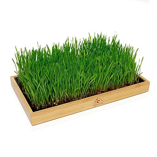 Pfotenolymp® Bambusrahmen mit Katzengras - Pflanzset für Katzen – Pflanzen Set fertig mit Weizengrassamen und Kokoserde - Katzengras Schale - DIY