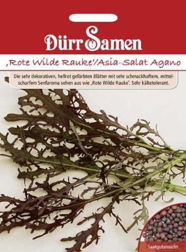 ,Rote Wilde Rauke'/Asia-Salat Agano