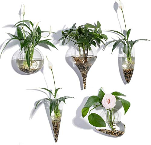 WayGlory Glas-Pflanzgefäße, klare Glasvase, Wandbehang, Pflanzgefäße, runde Glas-Pflanztöpfe, hängende Luft-Blumentöpfe, Blumenvase, Luftpflanzen-Terrarien, Wandbehang, Pflanzenbehälter (Stil 1)
