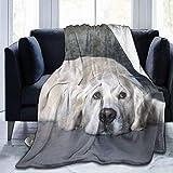 Manta de Tiro Golden Retriever Puppy Ultra-Soft Micro Fleece Blanketow Manta de Cama súper Suave y acogedora para Cama Sofá Sofá Sala de Estar Playa Picnic Otoño Primavera Invierno Useow Blan