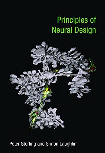 Principles of Neural Design (Mit Press)