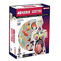 妊娠器官モデル、 人体解剖学の医学教育モデル、 パズル組み立ておもちゃ、 41のパーツを分割し、 医学教育訓練用