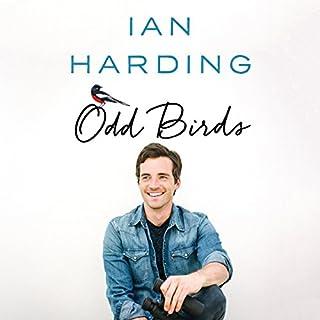 Odd Birds Titelbild