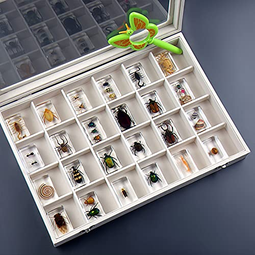 WXXT Muestras de Insectos Reales,Exquisito Juego de Regalo de muestras de Animales,muestras de Insectos,espécimen de Escarabajo araña escorpión,Regalo de cumpleaños,educación científica para niños