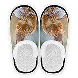 linomo Chaussons en forme d'écureuil mignons pour femmes, hommes, enfants, femmes, chaussons, pantoufles pour chambre à coucher, chaussures de voyage. - Multicolore - multicolore, 35/39 EU