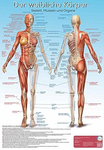Lernposter Anatomie - Der weibliche Körper: Der weibliche Körper mit Skelett, Muskeln und Organen