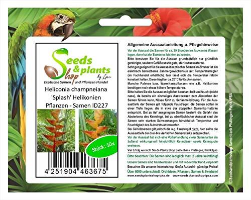 Stk - 10x Heliconia champneiana 'Splash' Helikonien Pflanzen - Samen ID227 - Seeds Plants Shop Samenbank Pfullingen Patrik Ipsa