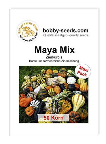 Bobby-Seeds Kürbissamen Zierkürbis Maya Mix 50 Korn