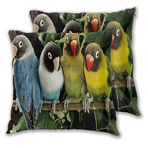 ELIENONO Juego de 2 Decorativo Funda de Cojín,Pájaros Coloridos Loros Loros de pie sobre una Rama,Funda de Almohada Cuadrado para Sofá Cama