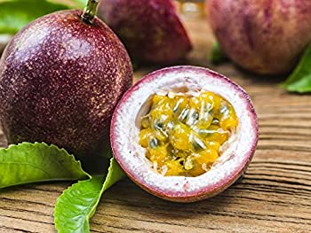 Best puerto rican fruit Reviews