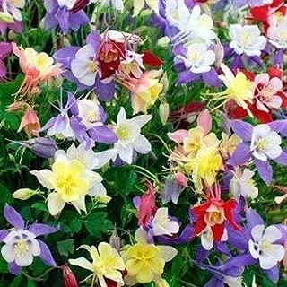 Outsidepride Columbine Flower Seed Plant Mix - 1000 Seeds