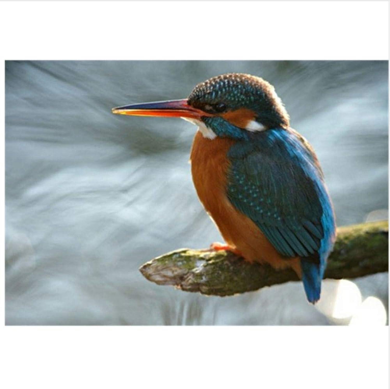 WAZHCY Malen Sie nach Zahlen Zahlen Zahlen für Kinder für Erwachsene Vögel auf dem Zweig DIY 40X50CM Ohne Rahmen B07PG4WGBX | Neue Produkte im Jahr 2019  ffb64e