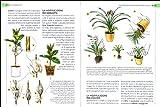Zoom IMG-2 piante in casa scelta cura