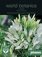 英国ミスターフォザーギルズシード&ジョンソンシード World Botanics Cleome Helen Campbell クレオメ・ヘレン・キャンベル