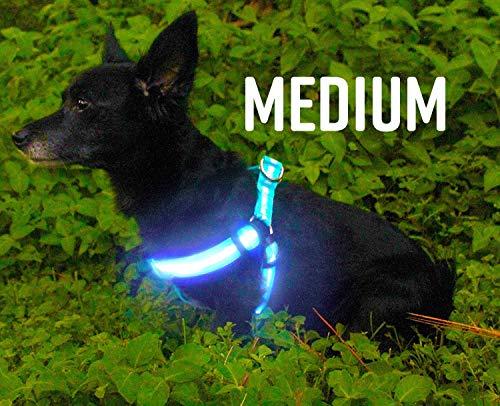 LED Dog Harness No-Pull