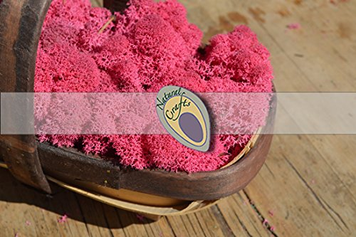 Dried Reindeer Moss Fushcia Pink Various Weights (1, 100g)