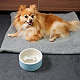Magisso Dog cat Bowl Cooling Ceramic Technology | Naturally Cooling Design | Keeps Water Chilled and hygienic for Hours (Medium, Blue)