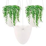 Ulikey 3Pcs Colgante de Plantas Macetas para Plantas Colgantes, Maceta de Colgante de Plástico, Colgante de Plantas, Suculento Aire Planta Maceta para Hogar, Exterior, Balcón y Jardín (3pcs)