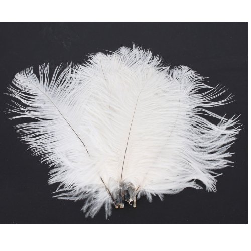 50 x White Ostrich Feathers (15-20 CM)