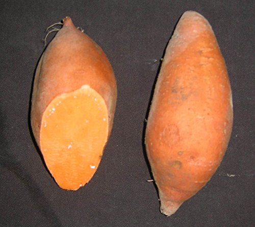 Sweet Potato Plants/Slips - Georgia Jet,Fast Growing,potatoes in only 90 days...