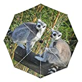 Paraguas pequeño de Viaje a Prueba de Viento al Aire Libre Lluvia Sol UV Auto Compacto 3 Pliegues Cubierta de Paraguas - Maki Lemurs Madagascar Monkeys Animals Fauna