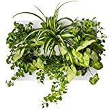 Ortisgreen Hang.Oasi.Home - Indoor Vertical Garden, Contains 1 White Planter Unit, Design Your Own Living Wall With Vertical Gardening Planters, Use Indoors, Holds 6 Plants