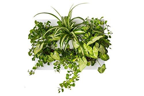 Ortisgreen Hang Oasi Home Indoor Vertikaler Garten