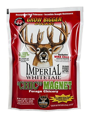 Whitetail Institute Chic Magnet Deer Food Plot Seed, WINA-100 Perennial Forage Chicory Attracts Deer and Provides Antler-Building Protein, Heat, Cold and Drought Tolerant, 3 lbs (1 Acre)