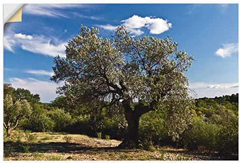 Artland Wandtattoo Wandbild selbstklebend als Wandaufkleber aus Vinylfolie 30x20 cm Olivenbaum in Südfrankreich T0DV