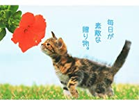 ポストカード 猫ネコ PB-460s