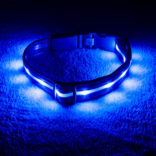 Blazin' Safety LED Dog Collar – USB Rechargeable with Water Resistant Flashing Light – Medium Blue