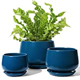Ceramic Pots for Plants