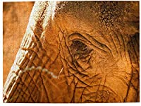 大人の象のためのWAWEHOYジグソーパズル500ピース