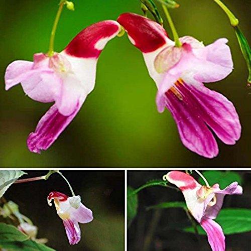 Loveble 100Pcs Rare Perroquet Orchidée Graines De Fleurs De Haute Qualité Bonsaï Jardin Accueil Graines Décorations De Jardin