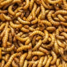 Free delivery 1kg bulk bag live regular mealworms PLUS tub of 250 waxworms valued at 7.99