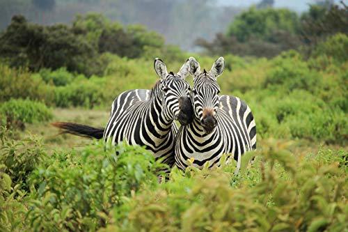 nonbranded Digitale Malerei Von Zwei Zebras Im Dschungelgras