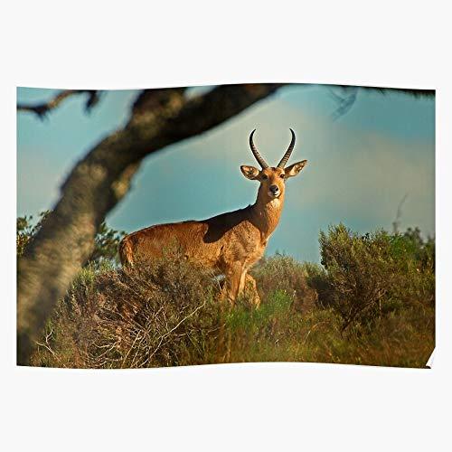 jcrew Africa Antelope Wildlife das Beste und neueste Plakat für Wandkunst Wohnkultur Zimmer
