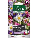bolsa de semillas Simple margarita reina con variada flor gigante Tezier