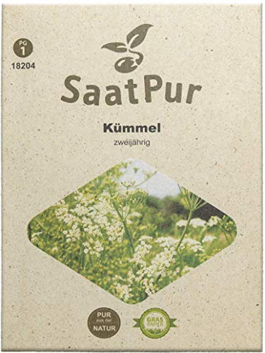 SaatPur Kümmel Samen, Saatgut für ca. 100 Pflanzen