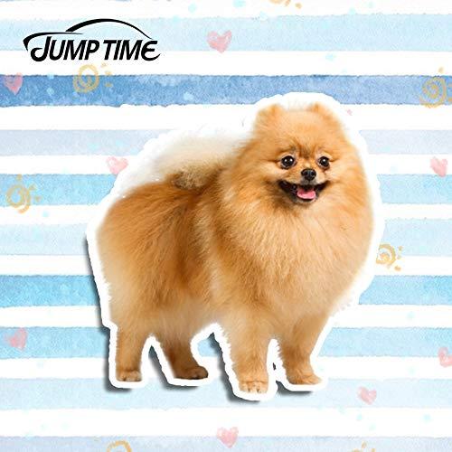 OLUYNG Etiqueta engomada del Coche 13 cm x 12,5 cm Perro Pomerania Adorable Mascota Pegatina de Vinilo Taza de Coche portátil Nevera 3D Estilo de Coche Pegatinas de Coche de Animales