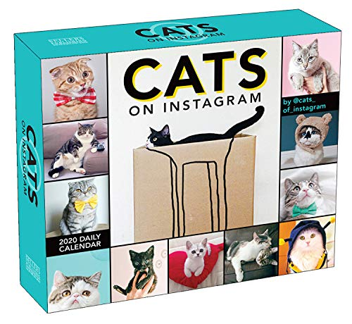 Cats on Instagram 2020 Calendar