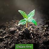 Zoom IMG-1 madame grow fertilizzante concime organico