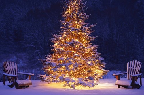 F.Mints Glowing Christmas Tree - Art Print Poster,Wall Decor,Home Decor(36x24inches)