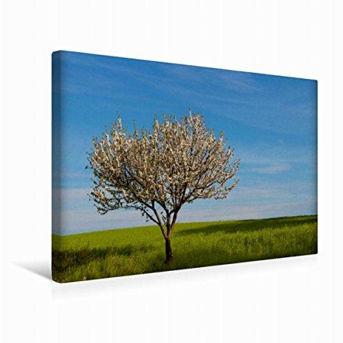 Premium - Lienzo de tela (45 x 30 cm, horizontal), diseño de calendario poético caminos de pared, imagen sobre bastidor, imagen sobre lienzo auténtico, impresión sobre lienzo (arte calvendo)