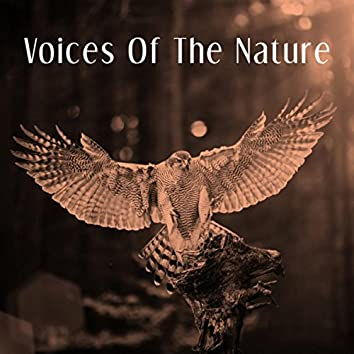 Voices Of The Nature