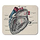 Aikul Mouse Pads Anatomy Vintage Anatomical Heart Diagram Biology Sciences Mouse Mat 9.5' x7.9' Mouse Pad Suitable for Notebook Desktop Computers Office Accessories