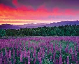 Springbok Puzzles - Purple Majesty - 2000 Piece Jigsaw Puzzl