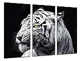 Cuadro Fotográfico Naturaleza Animales Salvajes, Tigre Blanco Tamaño total: 97 x 62 cm XXL